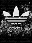 mk_adidas - foto